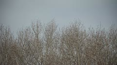 bare trees in winter - stock footage