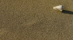 conch on sandy beach,wind blow sand - stock footage