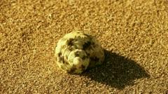 conch on golden sandy beach,wind blow sand - stock footage
