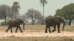 Elephants Walking 2 Stock Footage