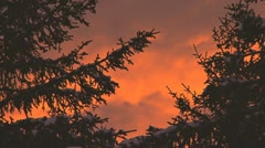 Somber Red Sky at Night Forest Silhouette of Waving Branches Stock Footage
