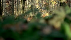 In the Forest 10 Stock Footage