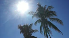 Coconut trees under the sun Stock Footage