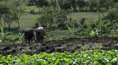 Farmer Plow Fields With Oxen Stock Footage