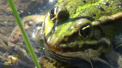 Frog Pond Stock Footage