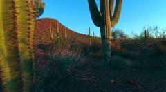 Arizona Saguaro Cactus Crane Shot Stock Footage