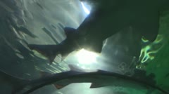 Shark swimming in an aquarium Stock Footage