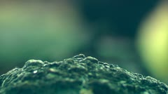 Ants at work. Background - stock footage