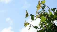 Spring Garden - Hawthorn Tree Stock Footage