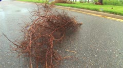 tilt down to debris from tree - stock footage