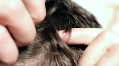 Combing through hair on Male head - stock footage