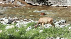 Deer river Waterton Park Canada P HD 0469 Stock Footage