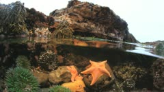 Tidepool Stock Footage
