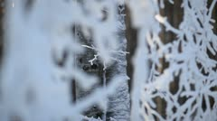 Winter forest landscape - focus and pan play on frozen trees Stock Footage