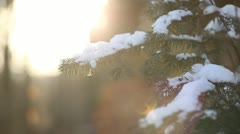 Fir tree branches in contre-jour with a bit snow falling Stock Footage