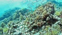 Underwater shoal fishes Stock Footage