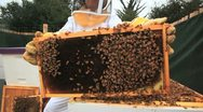 Bees and Beekeeper Stock Footage