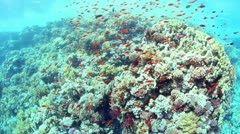 Fish Shoal Stock Footage