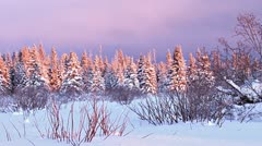 Snowy Darkening Sunset Forest Winter faster Stock Footage
