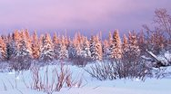Stock Video Footage of Snowy Darkening Sunset Forest Winter faster