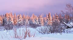 Snowy Darkening Sunset Forest in Winter Evening Stock Footage