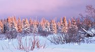 Stock Video Footage of Snowy Darkening Sunset Forest in Winter Evening