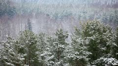 Over the winter forest Stock Footage