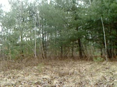 Whitetail Deer Checking Out Camera - stock footage