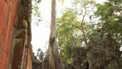 Tilt-down shot of Overgrowned trees at Ta Prohm Temple in Cambodia Stock Footage