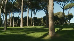 Trees glidecam (1) Stock Footage