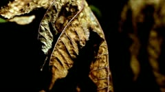 Dried leaves Stock Footage