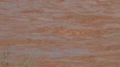 A scene of an overflowing river, brown with silt. Stock Footage