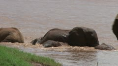 A zoom out of elephants playing in a swollen river. Stock Footage