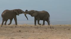 Bull elephants fighting Stock Footage