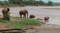 Elephants bathing in a swollen river Stock Footage