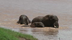 Elephants playing in the water Stock Footage