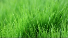 Green lush grass under the spray of rain Stock Footage