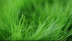 Green juicy grass in the wind Stock Footage