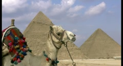 Camel and pyramids zoom out Stock Footage