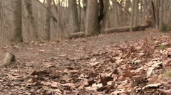 Girls walking down path in woods during fall Stock Footage