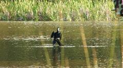 Bird on River Tree Branch Stock Footage