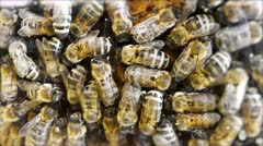 Honey bees Stock Footage