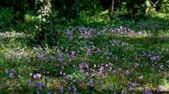 Flowers at Kirka NP, Croatia Stock Footage