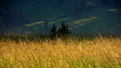 Tall grass Stock Footage