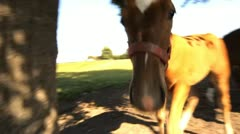 Horse attack Stock Footage
