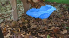 Collecting fallen leaves Stock Footage