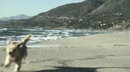 Stock Video Footage of puppy dog running on italian beach towards camera slow motion