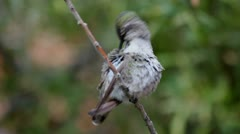 Hummingbird Beak Stock Footage