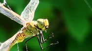 Stock Video Footage of Dragonfly caught in the web CU