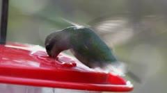 Hummingbird Feeds In Flight Stock Footage